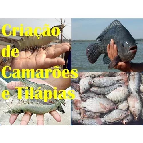 Curso De Criação De Camarões E Tilápias + Bônus!!!