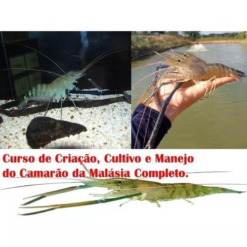 Curso De Criação, Cultivo E Manejo Do Camarão Da
