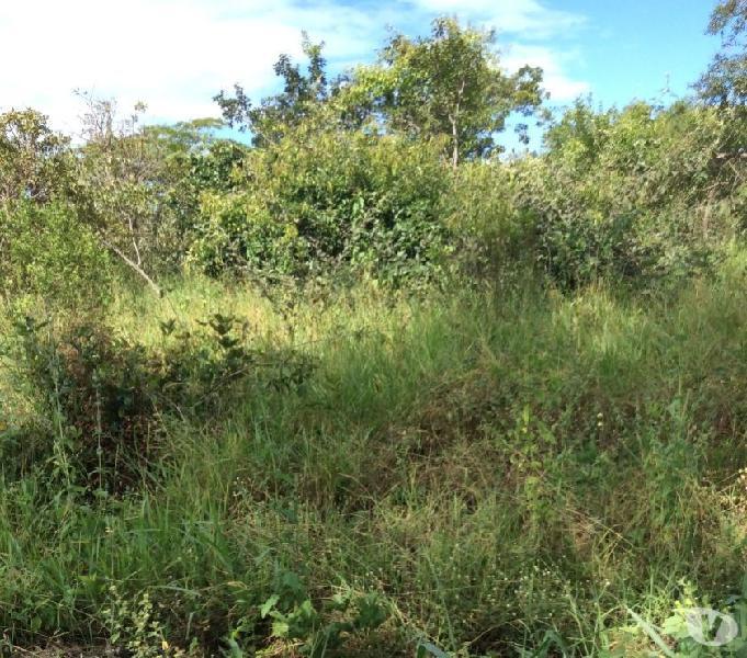 tima oportunidade de 90 hectares em serranópolis - go