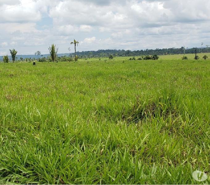 Fazenda de 63.000 hectares escriturada