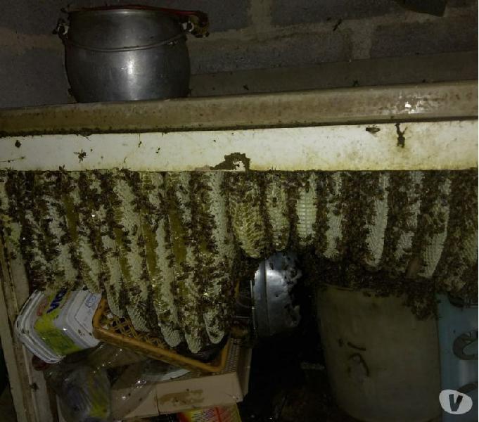 Remoção de abelhas, vespas e marimbondos.