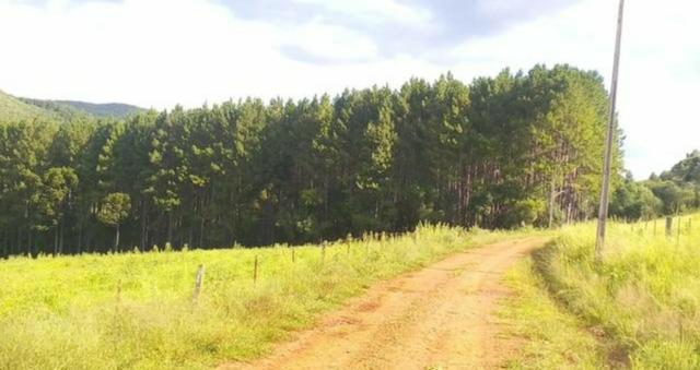 Mato de pinus ilhote