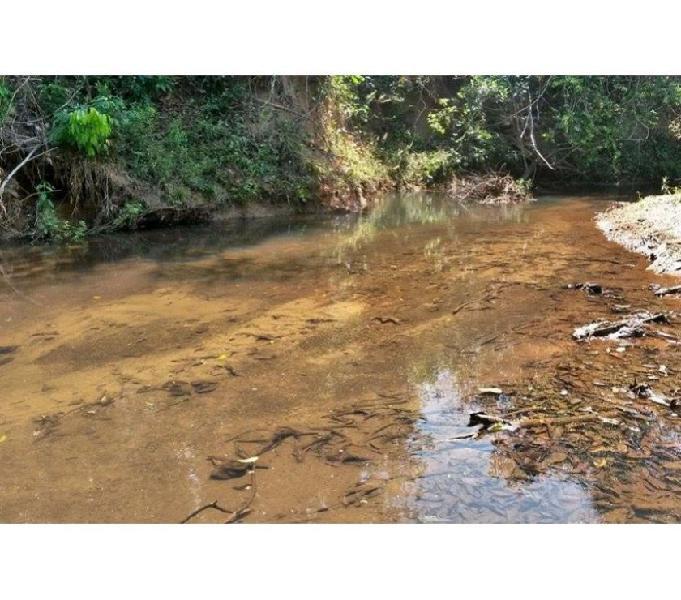Chacara com Rego d Agua e Ribeirão 60 km de goiania