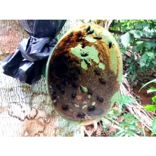 Colônia Enxame De Abelha Tubuna Na Isca Pet (4 Unidades)