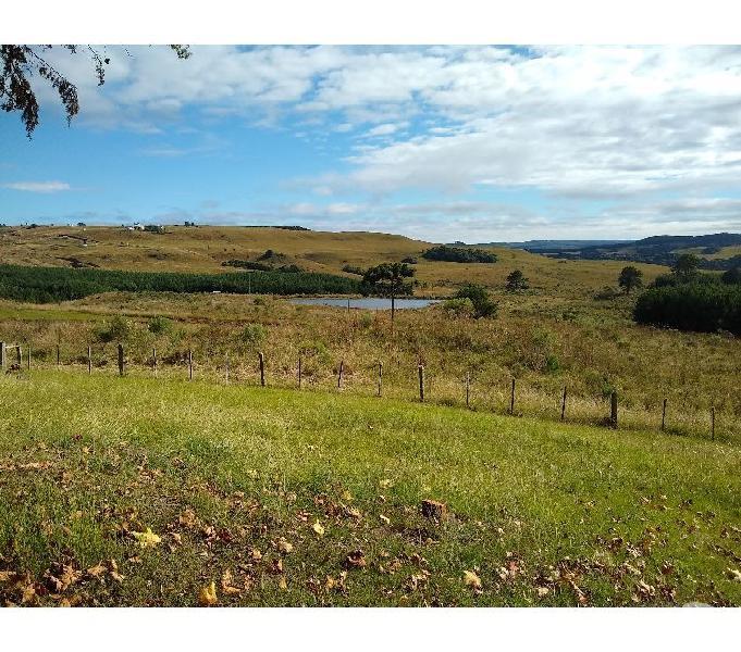 Fazenda de 280 hectares em São Francisco de Paula, RS