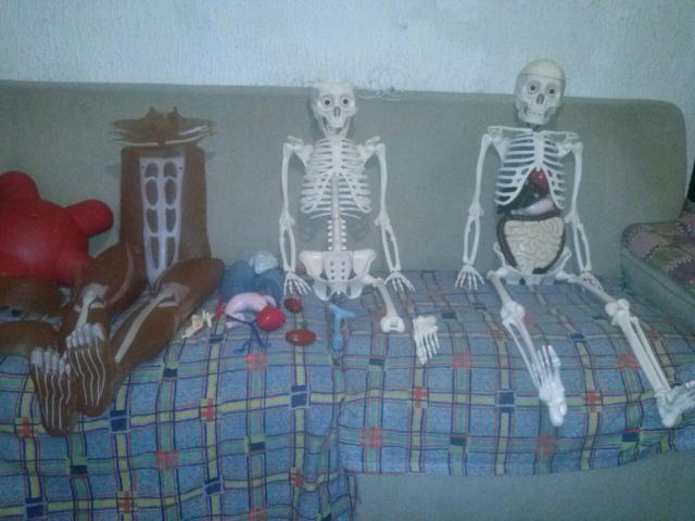 Coleção corpo humano esqueleto órgão e músculos