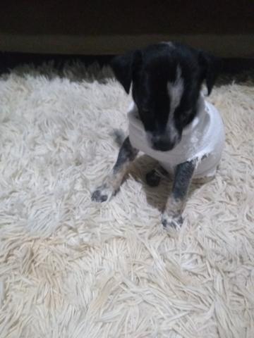Estou doando uma cachorrinha fêmea com 31 dias