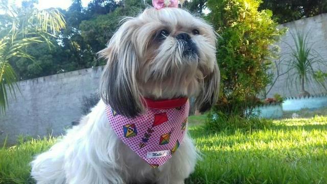 Kit de bandana para cachorro e gato