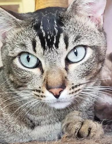 Gatos Tigrados Adoção Responsável - Sbc -sp - Risco De