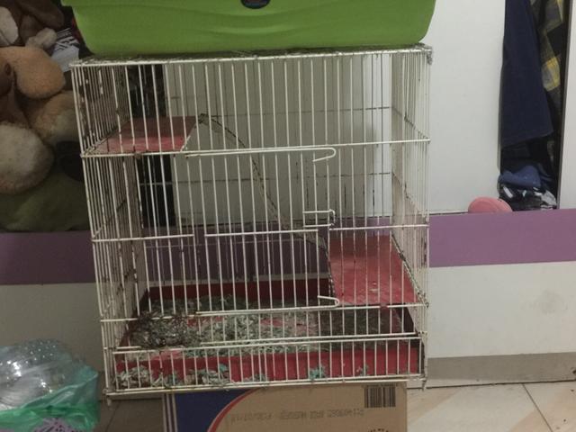 Troco gaiola de hamster