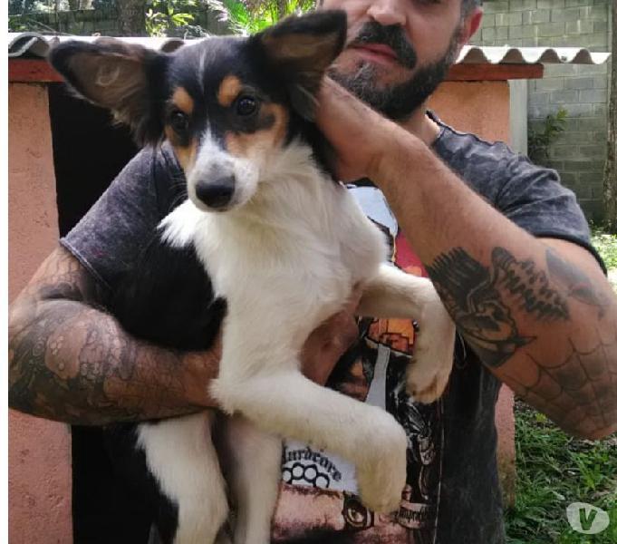 Frida, uma cachorrinha precisando de um lar