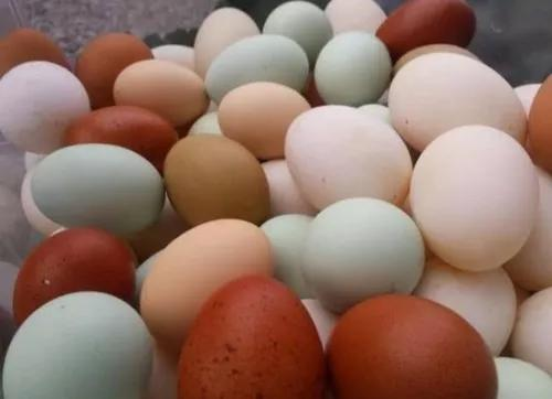 Ovos Caipiras De Índio Comum