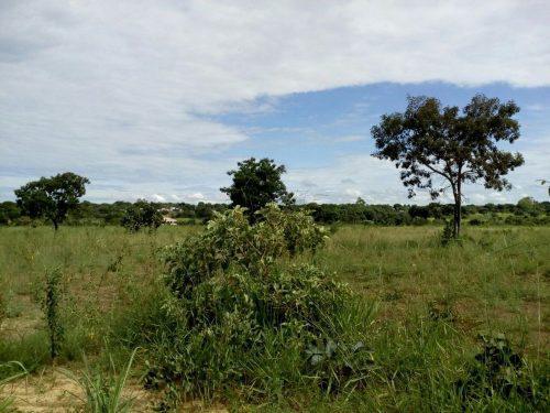 Lotes e Terrenos de Chácaras em Taboquinha-GO A Partir de