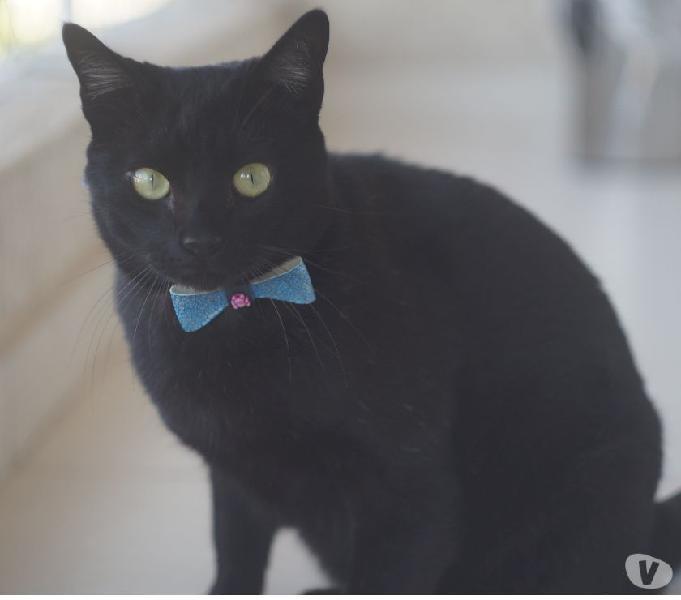 Bruce, um gatinho carente a procura de um lar