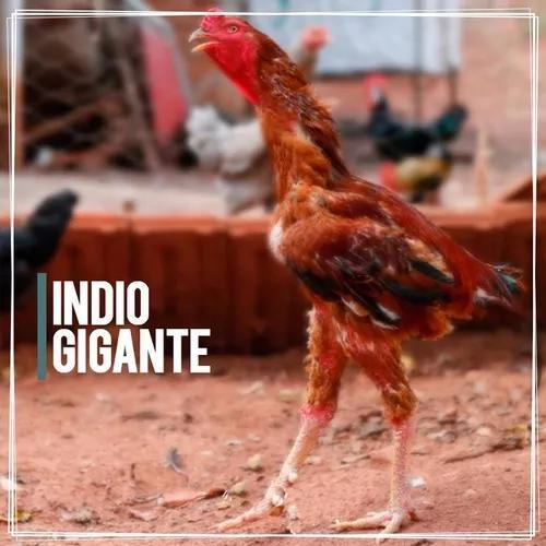 1 Dz De 15 Ovos Galados De Índio Gigante Frete Grátis