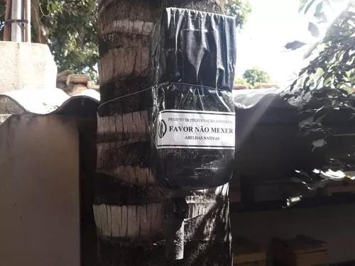 Colônia Enxame De Abelha Marmelada Preta Na Isca (2