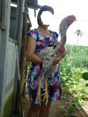 Indio Gigante Ovos Galados A Nossa Duzia Vai Com 15
