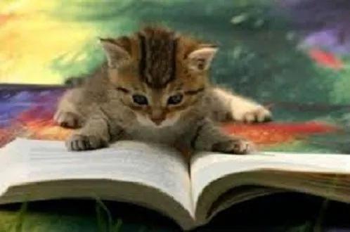 Lote Com 20 Livros Infanto Juvenis -9 À 16 Anos