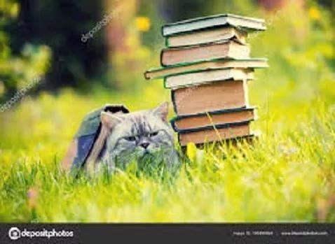 Lote Com 20 Livros Infanto Juvenis Para Revendedores