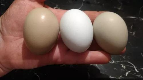 Mix De Ovos Férteis Várias Raças- 4 Dúzias-caipiras