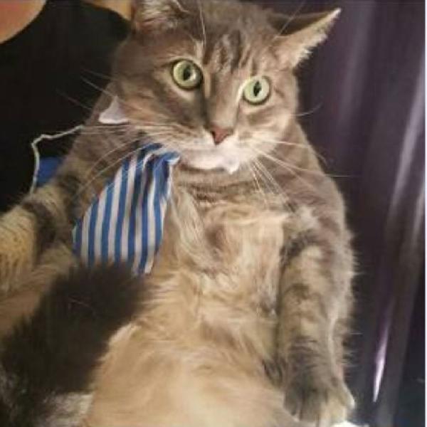 gravata para gatos e cachorros porte pequeno