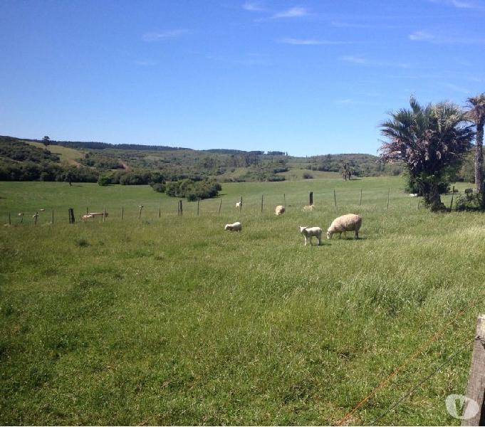 Fazenda 125,0 Hectares - Irui - Encruzilhada do Sul - RS