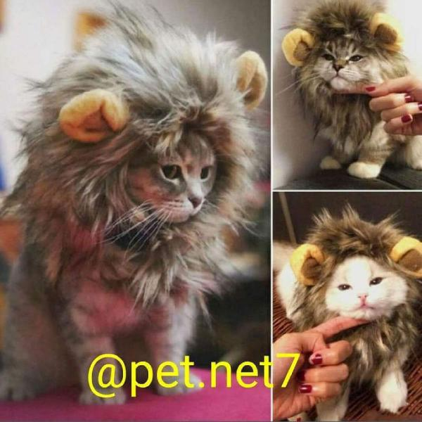 touca Juba de leão para gatos e cães porte pequeno