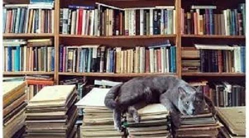 Lote 25 Livros Literatura Nacional E Estrangeirafrete