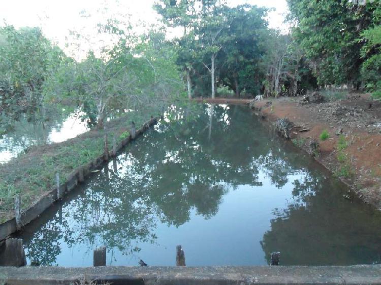 7 alqueires e 20 litros em Bela Vista de Goiás