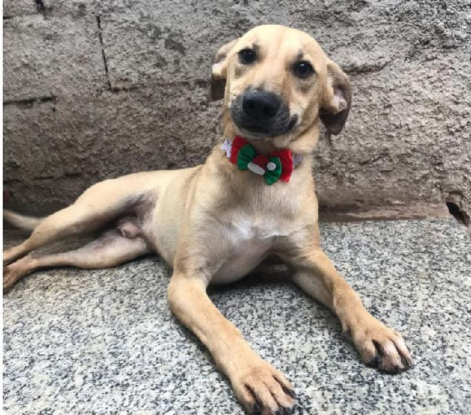 Bethoven, um cãozinho companheiro a procura de um lar