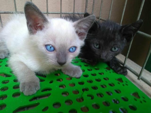 Gatinho macho e uma gatinha fêmea