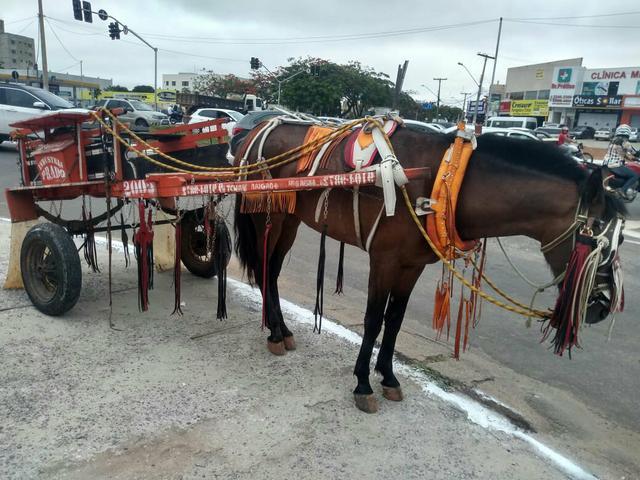 Vende se cavalo e carrosa traia completa