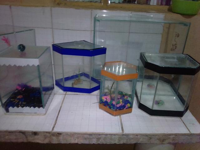 Vendo esses aquários