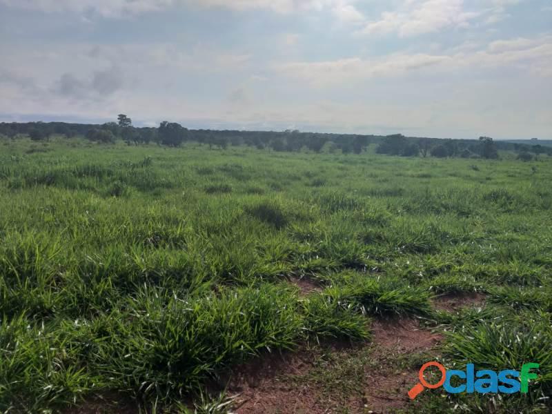 909 Alq. P/ Agricultura Estuda Prazo e 40% Permuta Em SP Com
