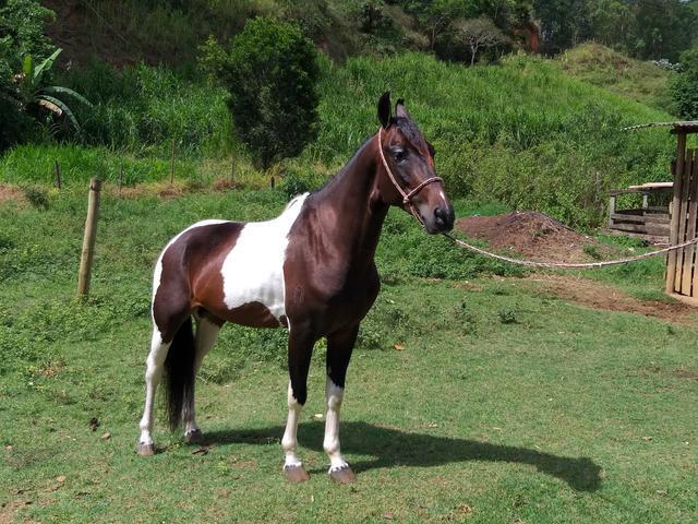Cavalo RG no MM