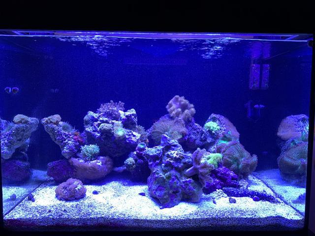 Aquário marinho 350L e corais (preços abaixo)