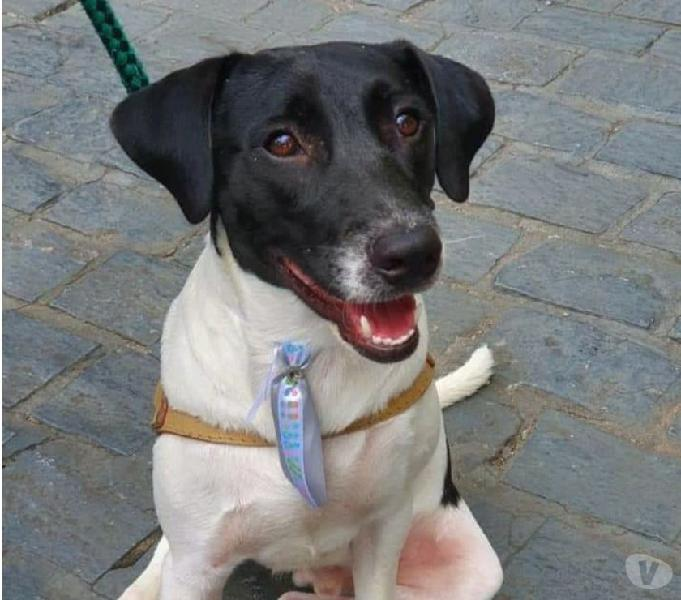 Valentim, um cãozinho sobrevivente procurando um lar