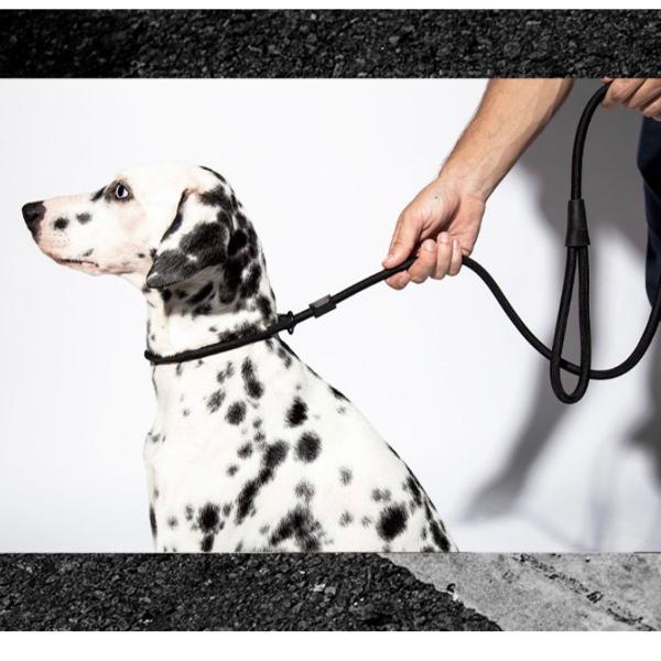guia unificada (guia e coleira enforcadora) zeedog gotham