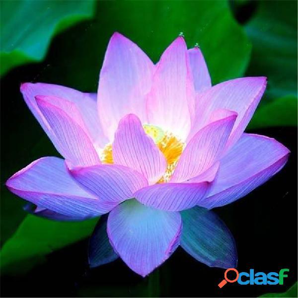 Egrow Lotus Flower Seeds Plantas aquáticas Bonsai Lotus