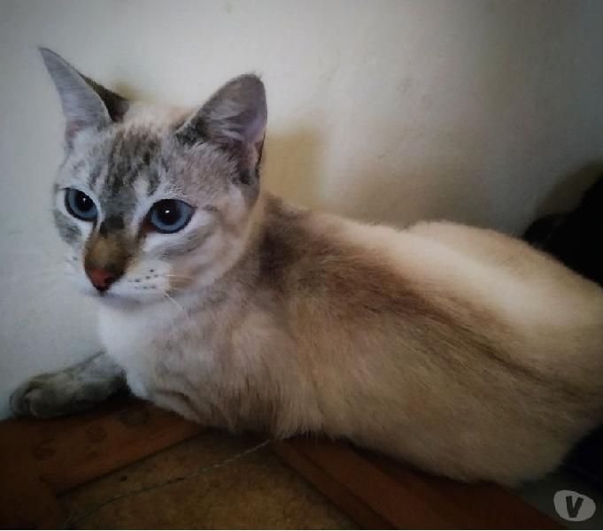 Gato abandonado de apenas 1 ano precisa de um lar