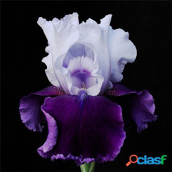 Egrow 40 Pcs / Bolsa Iris Tectorum sementes Popular Jardim