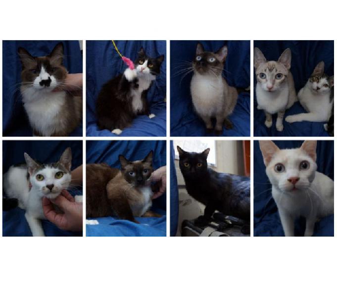 Gatinhos amorosos e carentes a procura de um lar