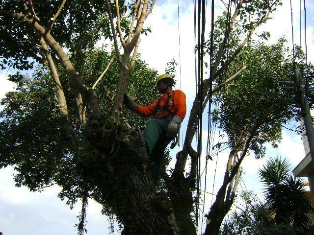 Poda e remoção de árvores