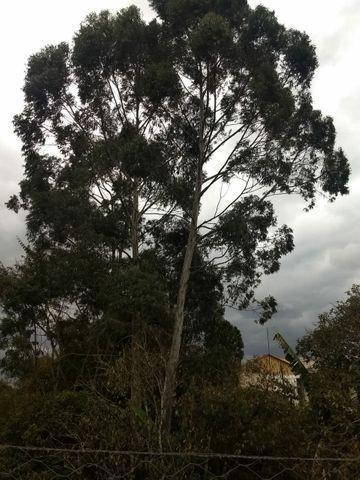 Podas e cortes de árvores.wts *